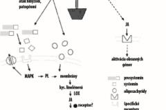 Obrázok 1 Schéma obranných procesov indukovaných pri poranení rastlín, ataku hmyzom alebo patogénmi10,11