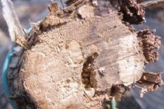 Obrázek 11 30 cm pod vrcholem kmínkuka